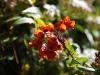 Pflanzenwelt am Irazu